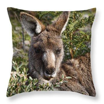 Lying Low Throw Pillow