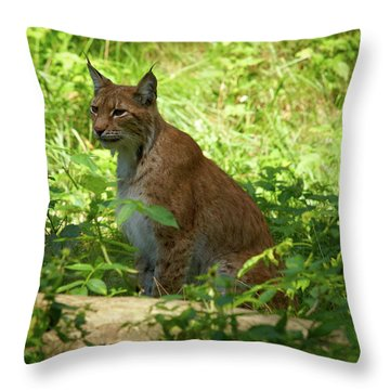 Lynx Throw Pillow by Jouko Lehto
