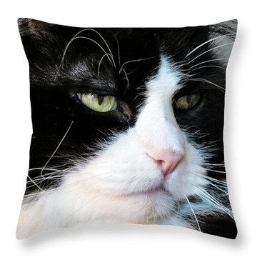 Maine Coon Face Throw Pillow by Art Dingo