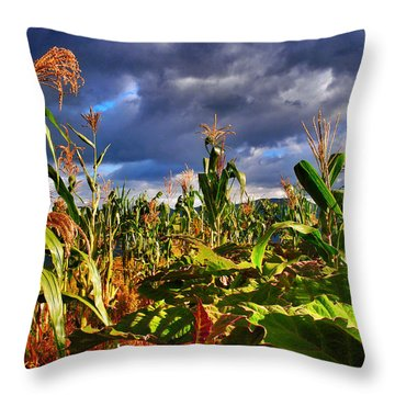 Maiz Throw Pillow by Skip Hunt