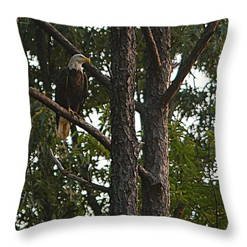 Majestic Bald Eagle Throw Pillow