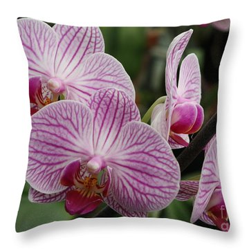 Majestic Orchids Throw Pillow by Carol Groenen