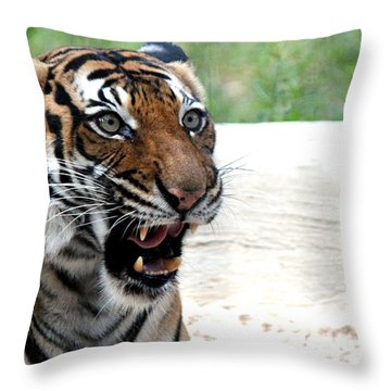 Throw Pillow featuring the photograph Make My Day by Kathy  White