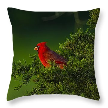 Male Cardinal In Pine Tree Throw Pillow