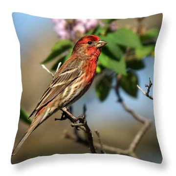 Male Finch Throw Pillow by Alan Hutchins