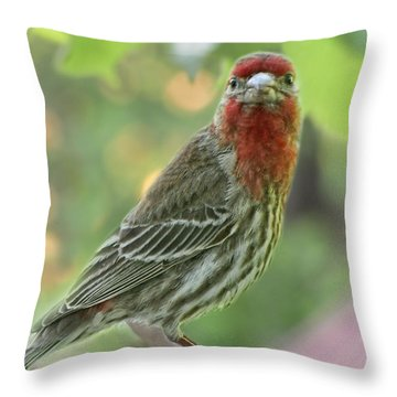 Throw Pillow featuring the photograph Male House Finch by Debbie Portwood