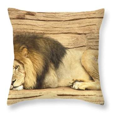 Male Lion Resting Throw Pillow