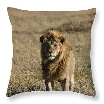 Male Lion's Gaze Throw Pillow by Darcy Michaelchuk