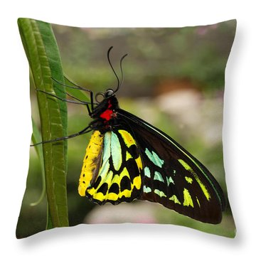 Throw Pillow featuring the photograph Male New Guinea Birdwing Butterfly by Eva Kaufman