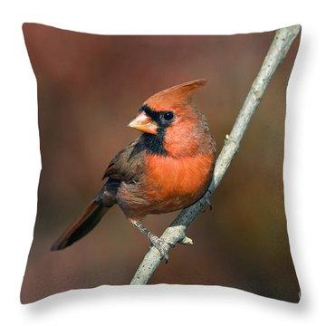 Male Northern Cardinal - D007813 Throw Pillow by Daniel Dempster