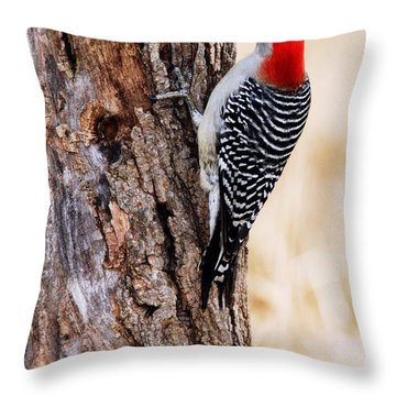 Male Red-bellied Woodpecker 2 Throw Pillow by Larry Ricker
