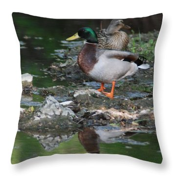 Mallard Couple Throw Pillow