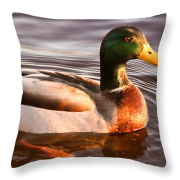 Mallard Duck At Sunset Throw Pillow by Ann Murphy