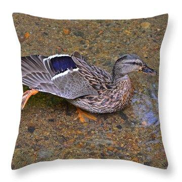 Mallard Hen Arabesque Throw Pillow by Sandi OReilly