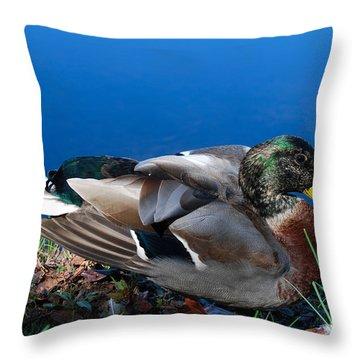 Throw Pillow featuring the photograph Mallard On River Bank by Eva Kaufman