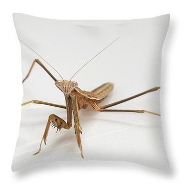 Throw Pillow featuring the photograph Mantis 1 by John Crothers