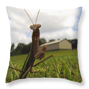 Throw Pillow featuring the photograph Mantis by John Crothers