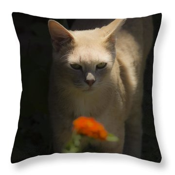 Many Moods Of Kitty Throw Pillow