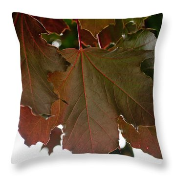 Throw Pillow featuring the photograph Maple 2 by Tikvah's Hope