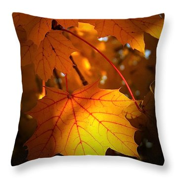 Maple At First Light Throw Pillow by Sue Stefanowicz