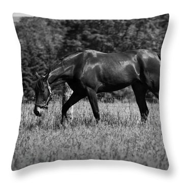 Throw Pillow featuring the photograph Mare In Field by Davandra Cribbie