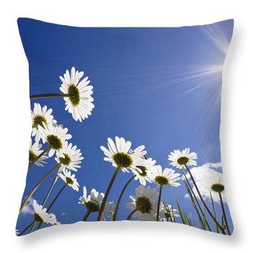 Marguerite Leucanthemum Vulgare Throw Pillow by Konrad Wothe