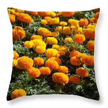 Marigold Throw Pillow by Atiketta Sangasaeng