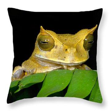 Marsupial Frog Throw Pillow by Dante Fenolio
