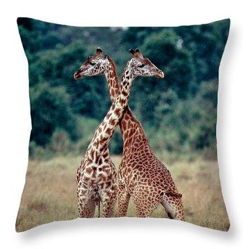 Masai Giraffes Necking Throw Pillow by Greg Dimijian