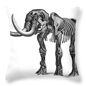 Palaeozoology Throw Pillows