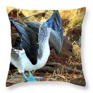 Throw Pillow featuring the photograph Mating Dance Of The Blue Footed Booby by Laurel Talabere
