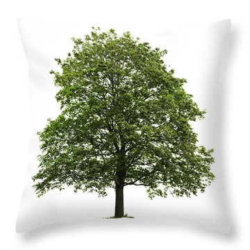 Mature Maple Tree Throw Pillow