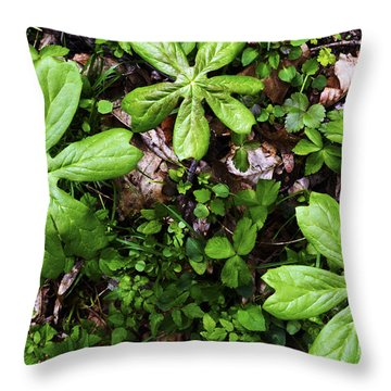 Mayapples In Forest Throw Pillow by Thomas R Fletcher