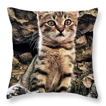 Mediterranean Wild Babe Cat Throw Pillow by Stelios Kleanthous