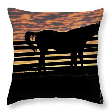 Memorial Day Weekend Sunset In Georgia - Horse - Artist Cris Hayes Throw Pillow by Cris Hayes