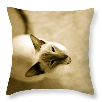 Throw Pillow featuring the photograph Meow by Lenny Carter