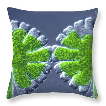 Micrasterias Rotata Throw Pillow by M. I. Walker
