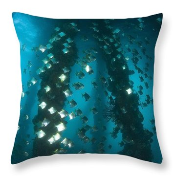 Milkfish, Dumaguete Pier, Philippines Throw Pillow by Stuart Westmorland