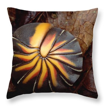Millipede Rolled Into Ball Position Throw Pillow by Mark Moffett