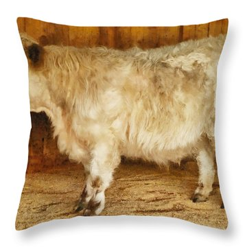 Mini Moo Throw Pillow by Steve Taylor