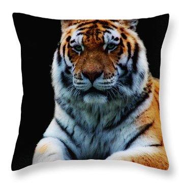 Minou Throw Pillow by Claudia Moeckel