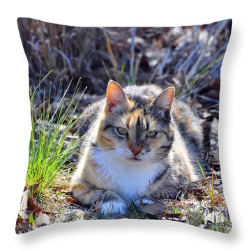 Miss Kitty Throw Pillow by Al Powell Photography USA