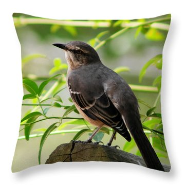Mocking Bird Picture 3 Throw Pillow by Ester  Rogers