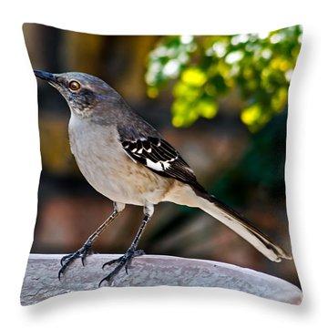 Mocking Bird Throw Pillow by Robert Bales