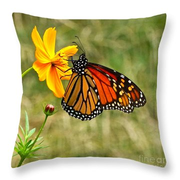 Monarch Butterfly And Yellow Cosmos Throw Pillow by Byron Varvarigos