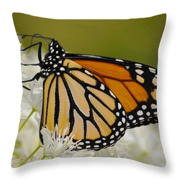 Monarch  Throw Pillow by Rodney Campbell