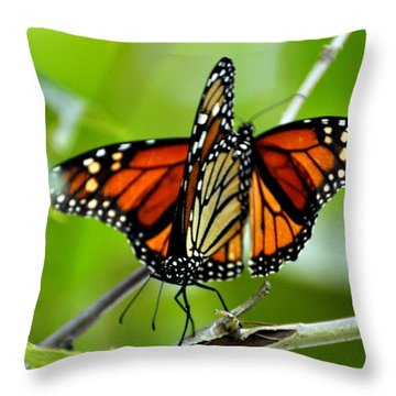 Monarchs Deluxe Throw Pillow by Marty Koch
