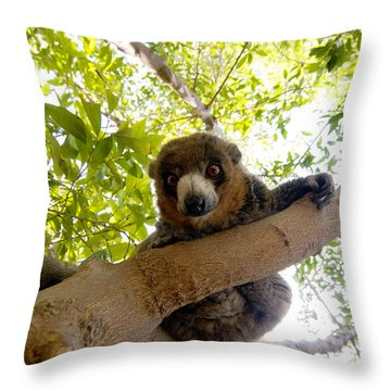 Mongoose Lemur Throw Pillow