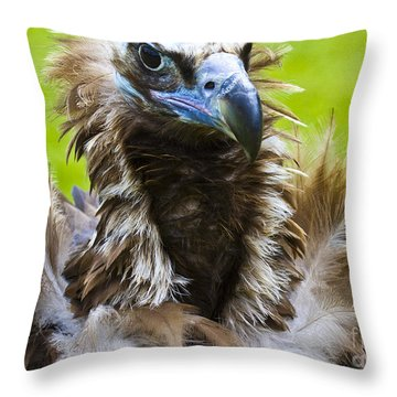 Monk Vulture 4 Throw Pillow by Heiko Koehrer-Wagner