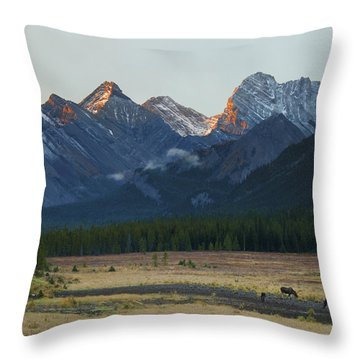 Moose Grazing At Sunset With Mountains Throw Pillow by Philippe Widling